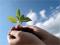 О соблюдении законодательства по защите растений